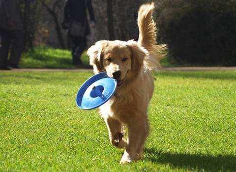 宠物狗玩玩具 促进身心健康